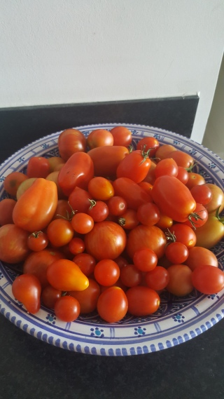 the little ones are nice and tangy even when they're not fully ripe